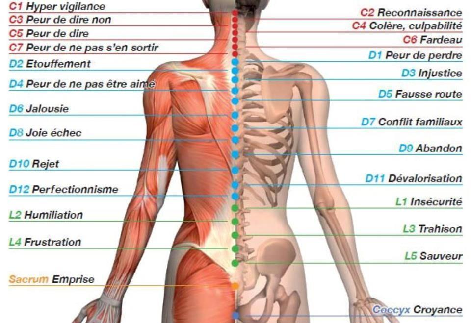 massage vertebre sentiment